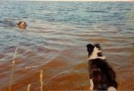 5.8.1996 Ensimmäistä kertaa tutustumassa järviveteen. Rino uimassa ja minä ihmettelen.