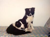 5.9.1996 Veljeni Ziggy