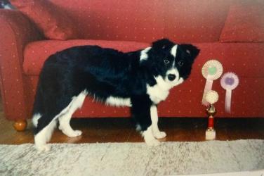 10.11.1996 Hyvinkään pentunäyttelyssä olin VSP-pentu