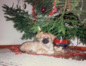 Ensimmäinen joulu 1991