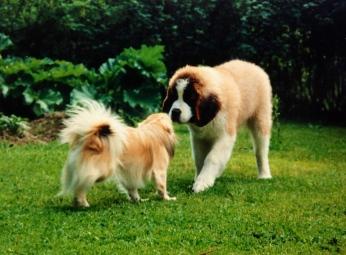 Phoban uusi tuttavuus Benny kesällä 1993