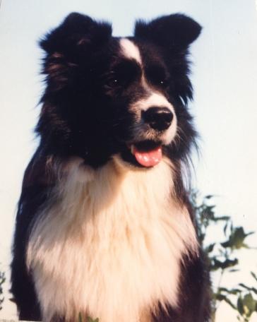 Pepe kesällä 1999