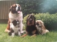 Jengi vuodelta 1996 bernhardinkoira Benny, borcercollie Caro, hovawart Rino ja tiibetinspanieli Phoba