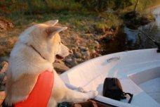 """Kisu rakastaa veneilyä. """"Haluan jo kyytiin!"""""""