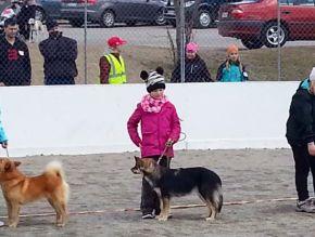 Vappu 2014 Match Show Iiris lapsi-koira -kilpailussa. Käpy oli niin hienosti!