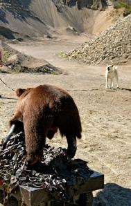 Kisu piti huolen, että Karhu pysyi tietyn välimatkan päässä.