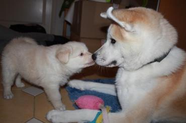 Sitten pusu...